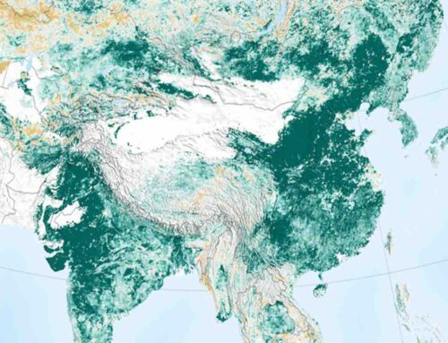 NASA Happily Reports the Earth is Greener, With More Trees Than 20 Years Ago–and It's Thanks to China, India